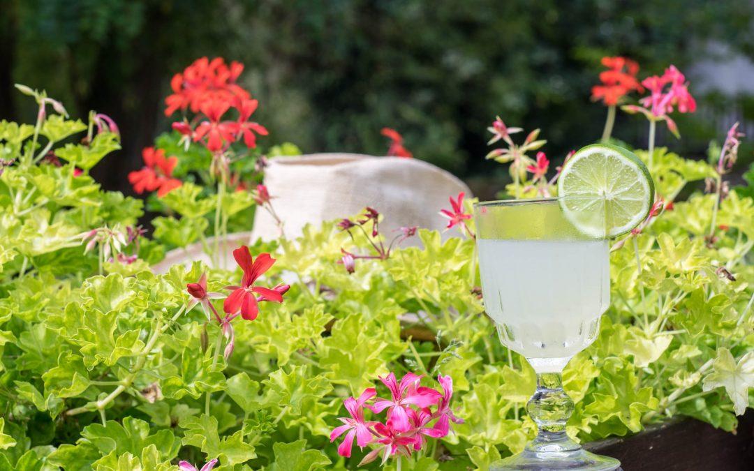 Le Daïquiri, le cocktail cubain par excellence, acidulé et rafraîchissant !