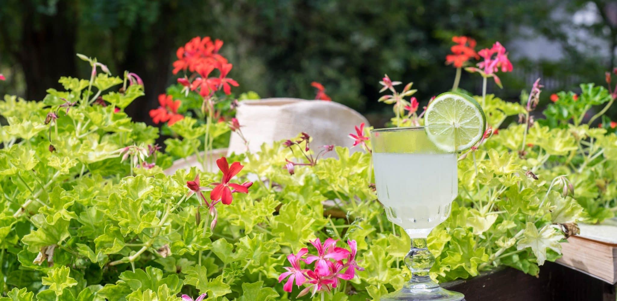 daiquiri-recipe-cocktail