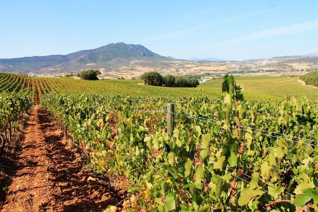 jerez vignes, vins d'espagne