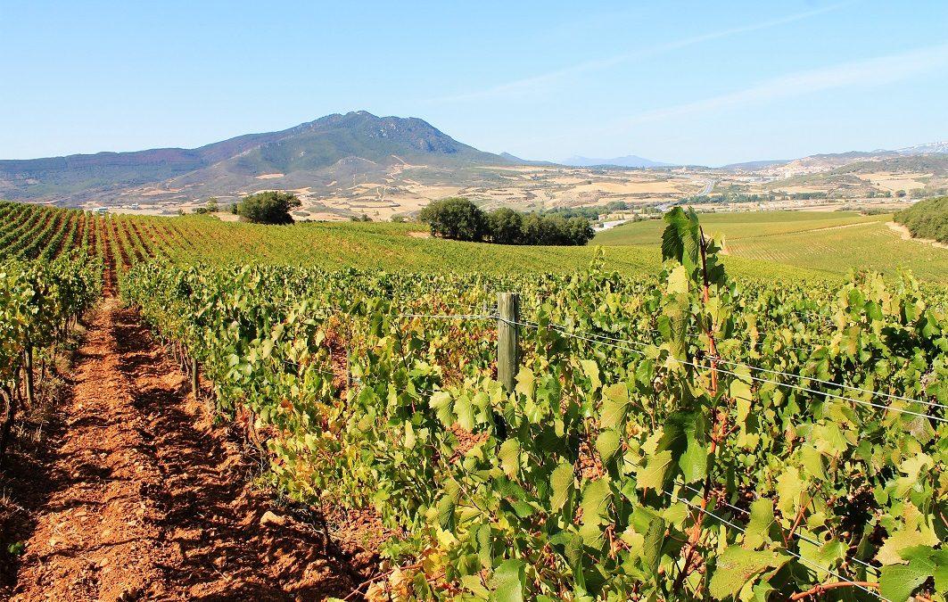 Tout ce qu'il faut savoir sur les vins de Jerez (ES), Xères (FR), Sherry (EN)
