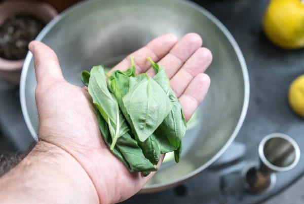feuilles de basilic dans le cocktail de mariage