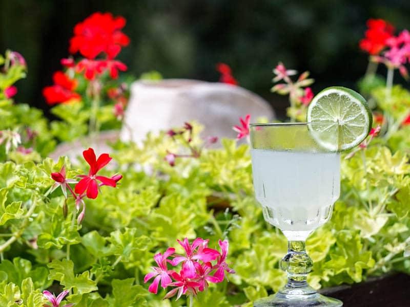 Cocktail servi dans un bar evenementiel